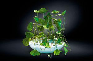 Round Bowl Lotus, Vase aus weiß lackiertem Harz